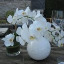 130x130 sq 1223276205485 whiteorchids
