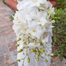 130x130 sq 1344577476219 whiteorchidscascadingbouquet