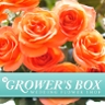The Grower's Box (www.growersbox.com)