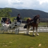 Clydesdale Events Carriage Company