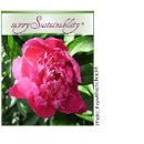 130x130 sq 1200627931372 savvysustainability%c2%ae4peonycredit