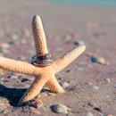 130x130 sq 1307649403715 ringsstarfish