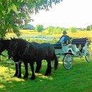 130x130 sq 1339527693907 carriagecar