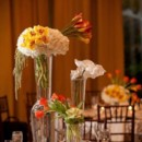 130x130_sq_1382125744753-wedding-centerpiece-trilogy-hyd-cymb-and-tulips