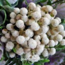 130x130_sq_1371838977903-floral-5