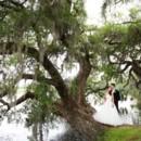 130x130 sq 1432570112880 couple on tree