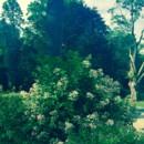 130x130 sq 1471634165929 trees