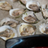 96x96 sq 1486226663852 oysters