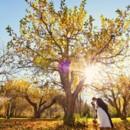 130x130 sq 1425314134887 dawn orchard fall