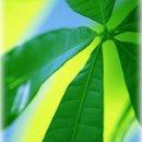 130x130 sq 1224522762038 leaf