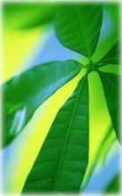 220x220 1224522762038 leaf