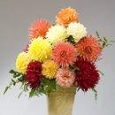 130x130_sq_1224540028209-flower3a