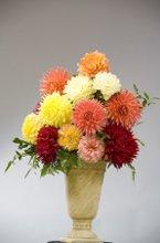 220x220 1224540028209 flower3a