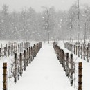 130x130 sq 1420732921677 zorvino vineyards winter