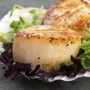 130x130_sq_1396452267751-scallops-in-shel
