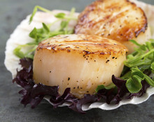 220x220_1396452830081-scallops-in-she
