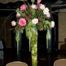 130x130_sq_1234449007062-lime-pinktopiary
