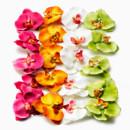 130x130 sq 1420207031922 orchids 6739 etjww