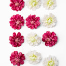 130x130 sq 1420207160424 dahlia flowers 6825 f4h1 2ww