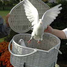 220x220 sq 1267221630129 birds054