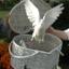 64x64 sq 1267221630129 birds054