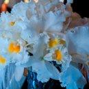 130x130 sq 1296632951061 bouquet