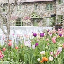220x220 1477412703252 tent hitched studios   tulips for may wedding 800x