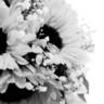 96x96 sq 1452970128412 wasser wedding 00128