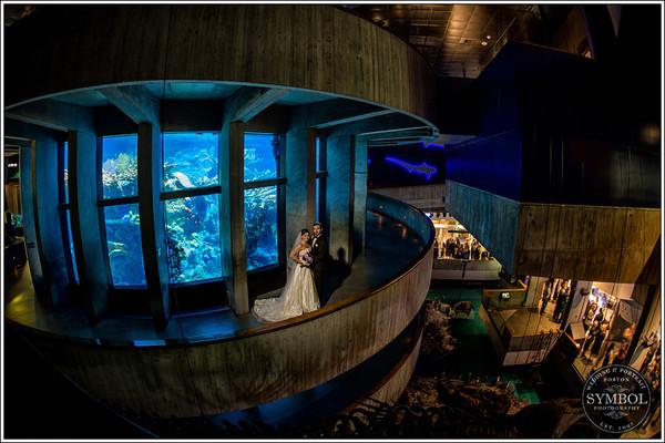 New England Aquarium Boston Ma Wedding Venue