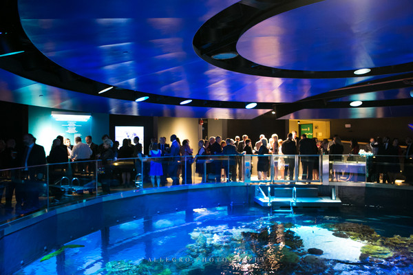 New England Aquarium Boston Ma Wedding Venue