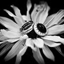 130x130 sq 1235578531573 richter scafide wedding 290