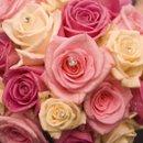 130x130 sq 1241719894405 roses8