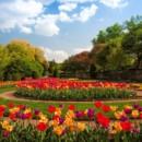 130x130 sq 1414529544692 tulips