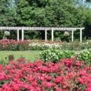 130x130 sq 1414529844156 cantigny park rose garden