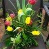 130x130 sq 1238761986562 tulip1