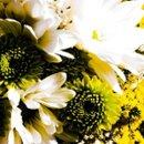 130x130_sq_1232997498125-flowersweb