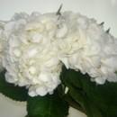 130x130 sq 1384325205975 hydrangea white   cop