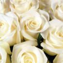 130x130 sq 1384325337022 white roses 1531