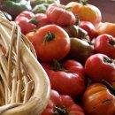 130x130 sq 1344289749837 tomatoes