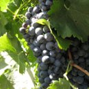 130x130 sq 1233849353998 openhouse.grapes,norah064