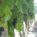 130x130 sq 1233849841873 openhouse.grapes,norah053