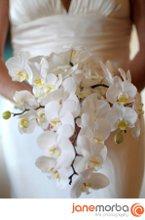220x220 1234224143871 flowers06