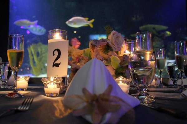 photo 20 of A Gala Affair-Event Design & Decorating