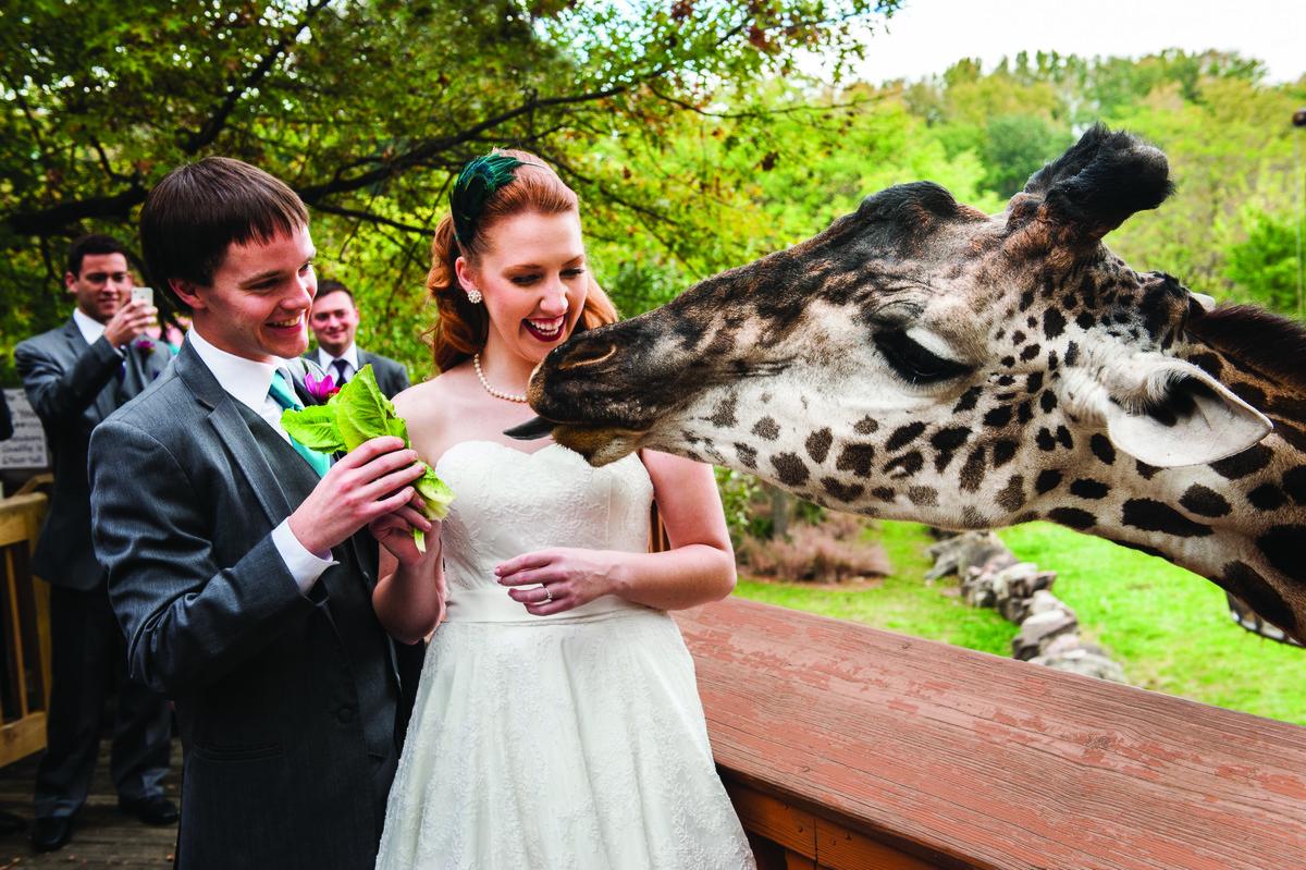 Spotlight Wedding Venues Near Akron Cleveland Metroparks Zoo