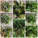 130x130 sq 1458181744572 5.29.15green bouquets