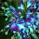 130x130 sq 1338606616429 blueorchids