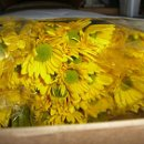 130x130 sq 1338607467311 daisieswww.perlafarms.com