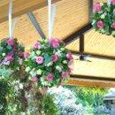 130x130_sq_1268787038566-flowers5phillips