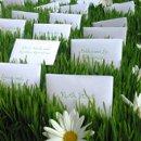 130x130 sq 1235593845388 grass daisy escort