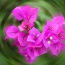 130x130_sq_1238602285722-flower